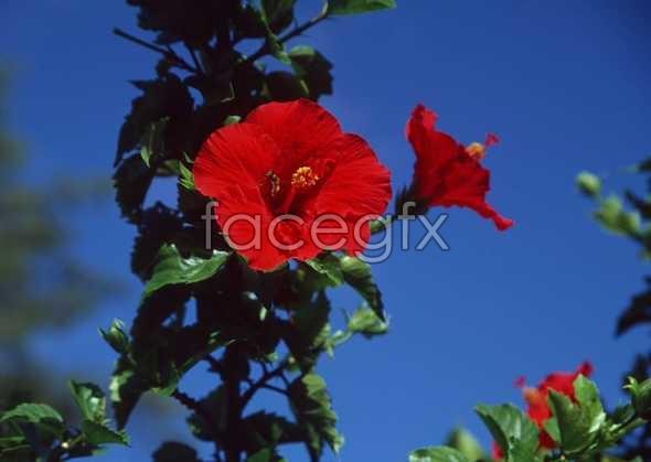 Flowers close-up 1075