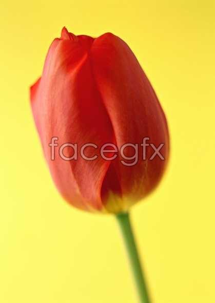 Flowers close-up 1318