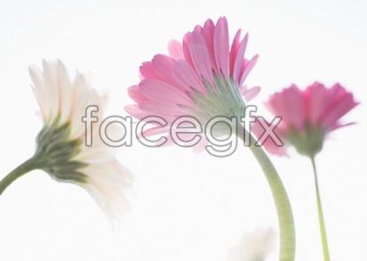 Flowers close-up 2,052