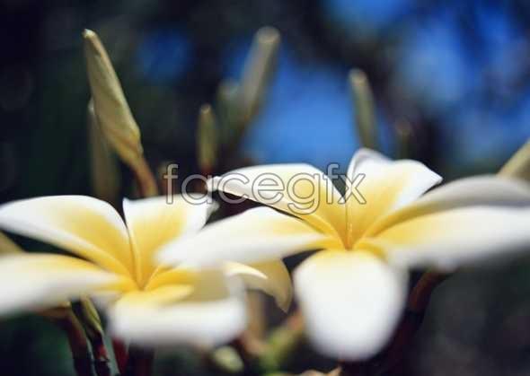 Flowers close-up 2027