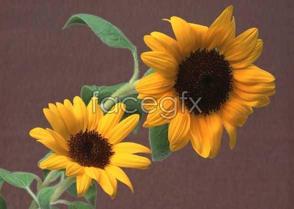 Flowers close-up 994