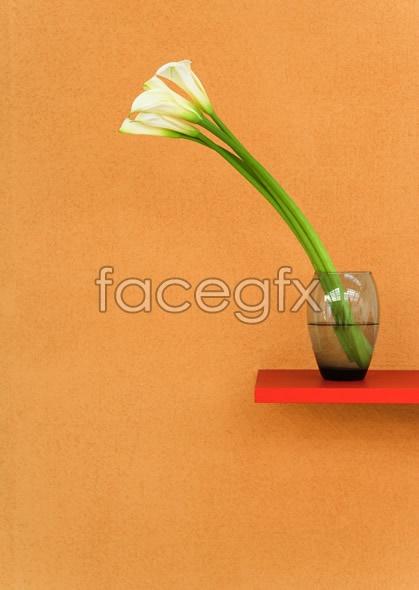 Indoor flower 80