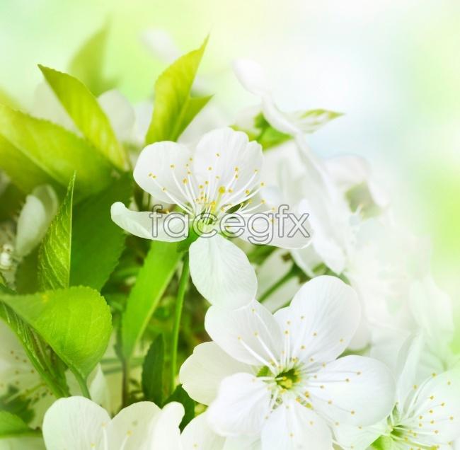 Jasmine photography pictures