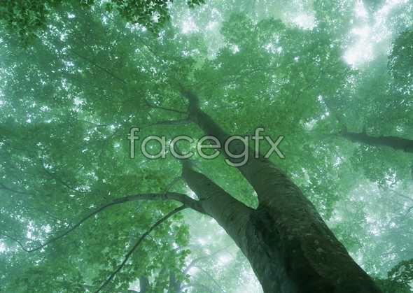 Jungle beauty of 130