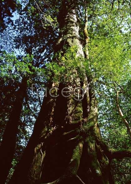 Jungle beauty of 344