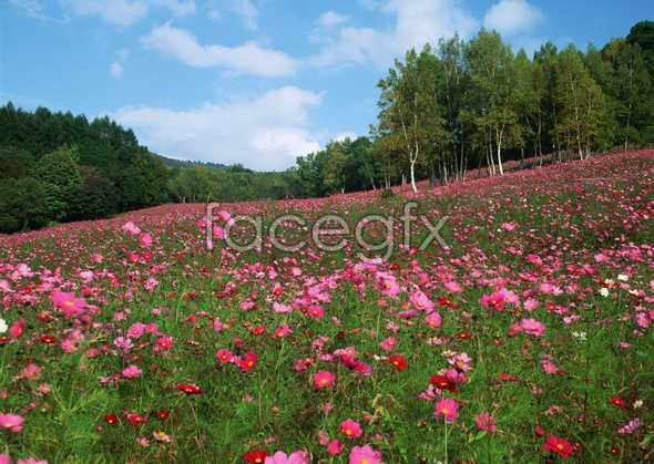 Thousands of flowers 652
