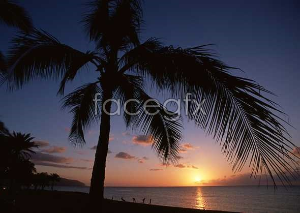 Wrong yellow Palm tree on the beach sunset picture