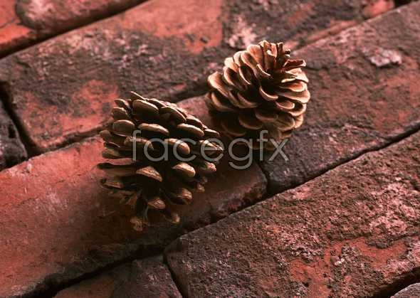 Flowers close-up 1142
