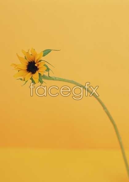 Flowers close-up 1640