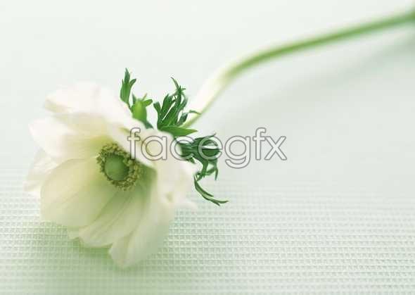 Flowers close-up 1671