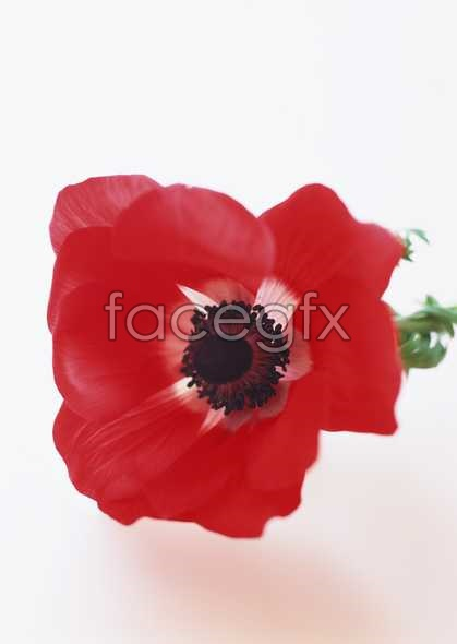 Flowers close-up 1682