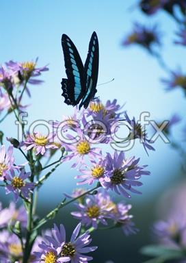 Flowers close-up 2,075