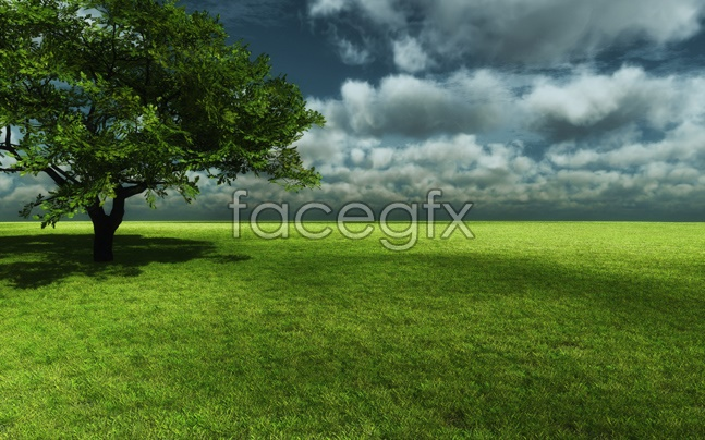 Grass sky picture