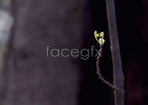 Flowers close-up 1196