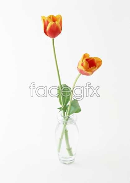 Flowers close-up 1351