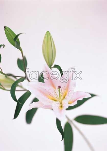 Flowers close-up 1708