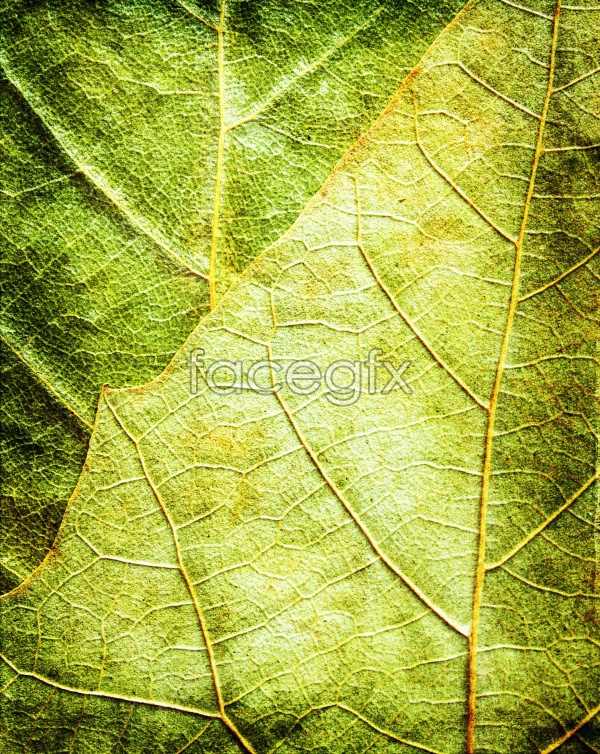 HD leaves material picture