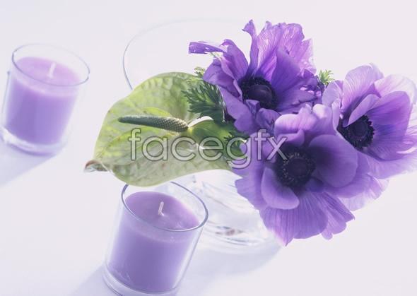 Indoor flower 124