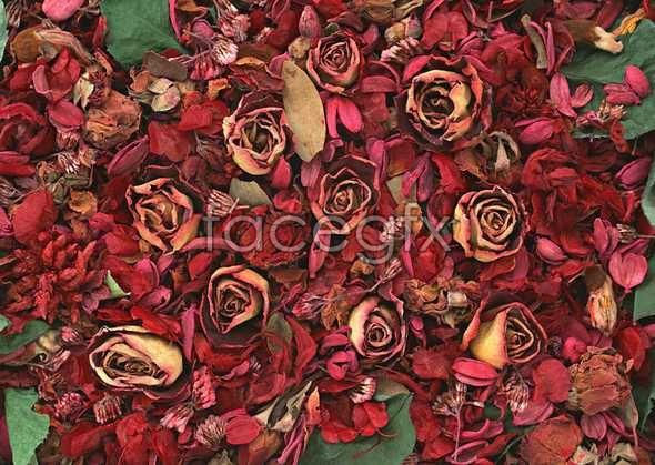 Flowers close-up 1073