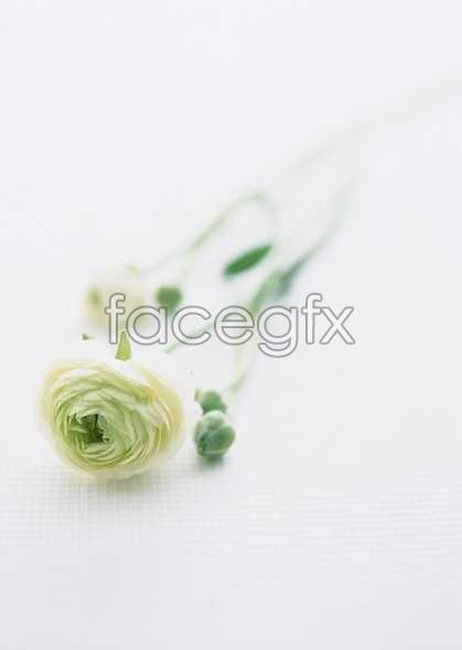 Flowers close-up 1672