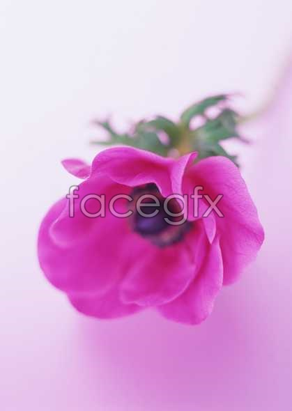 Flowers close-up 1680