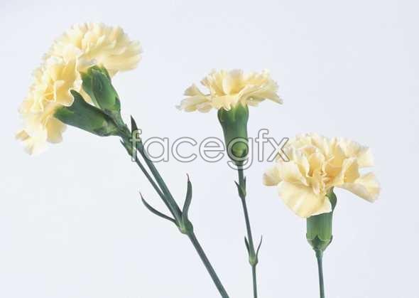Flowers close-up 51