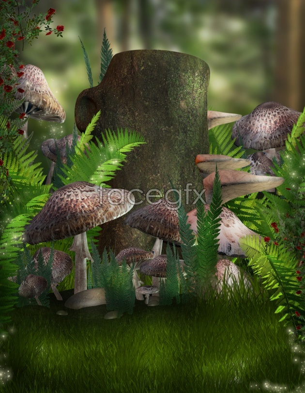 Forest mushroom pictures in HD