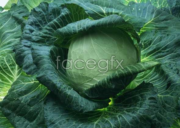 Fresh fruits and vegetables 9