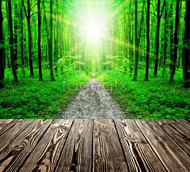 Green Woods picture