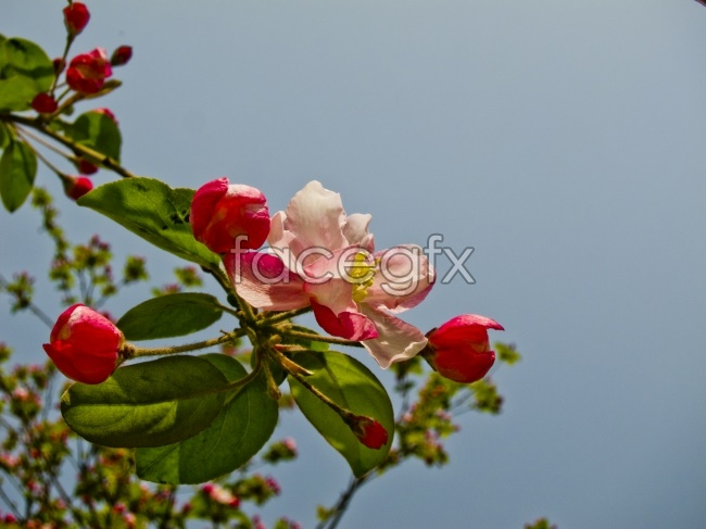 Rhododendron pictures