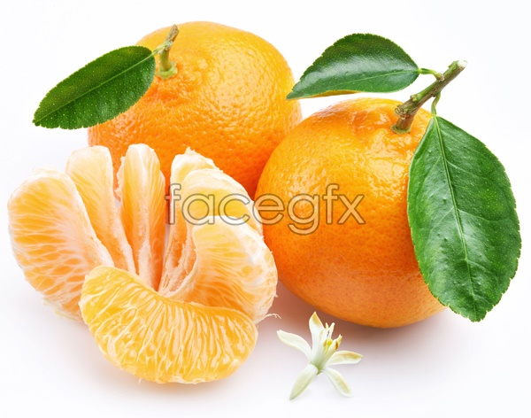 Sweet orange HD picture
