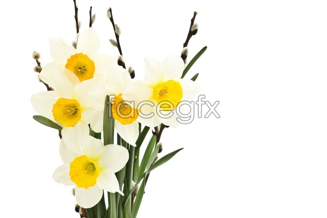 White flower background pictures