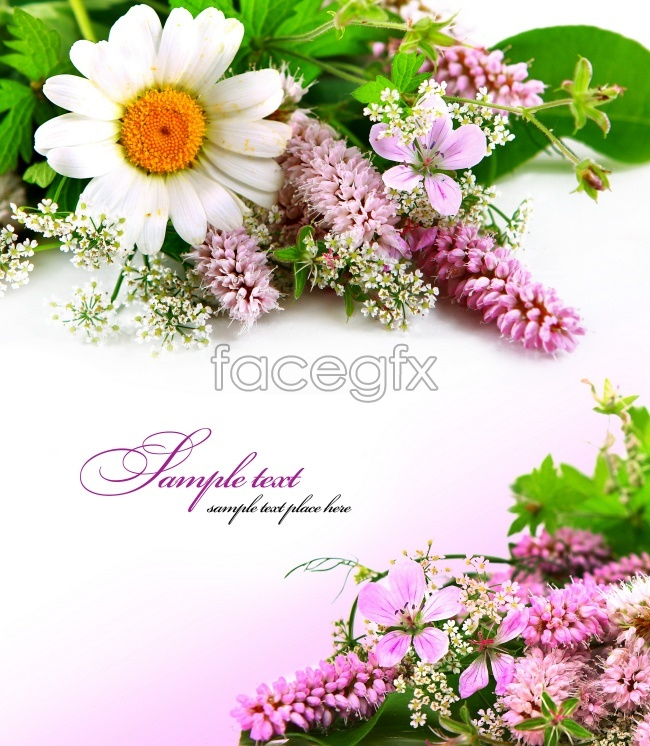 Beautiful Lavender card picture