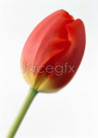 Flowers close-up 1316