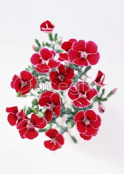 Flowers close-up 1761
