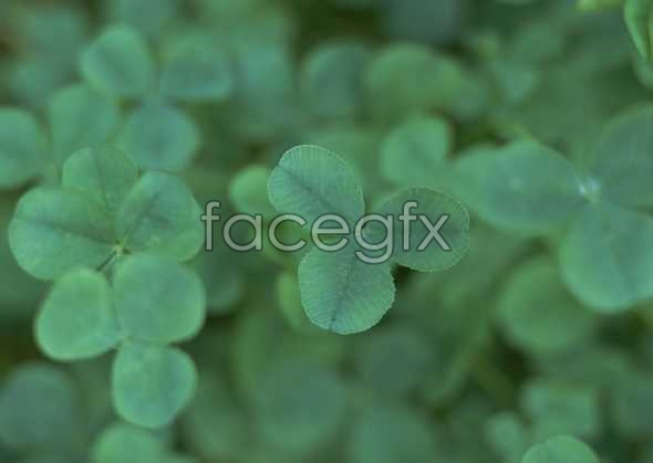Flowers close-up 2019