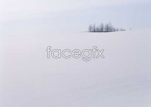 Ice 305