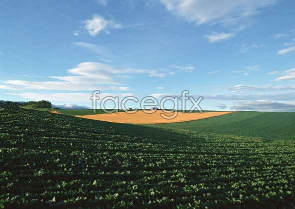Idyllic rural 54