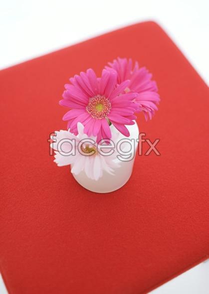 Indoor flower 44