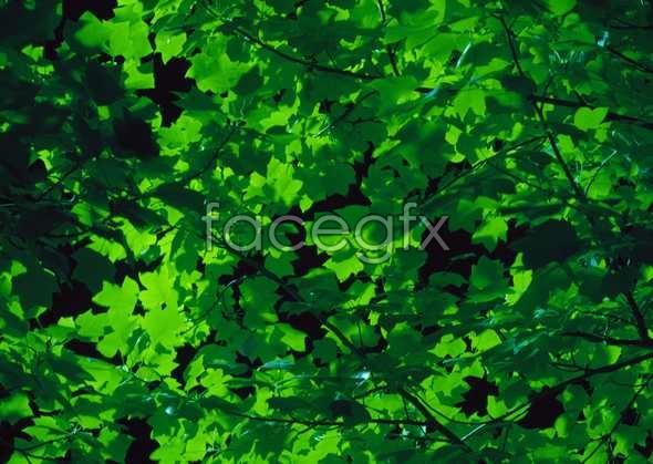 Jungle beauty of 279