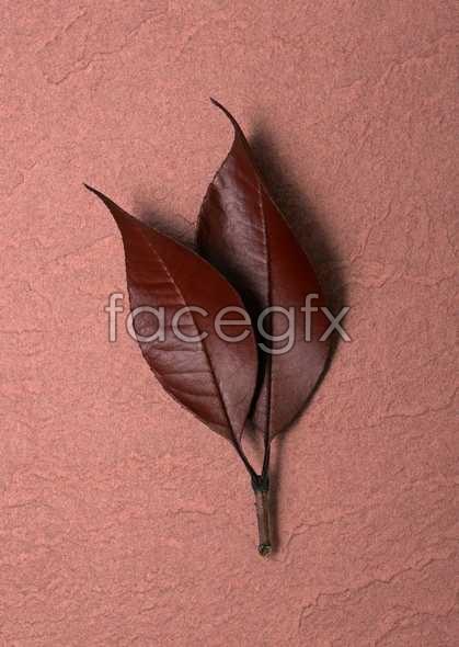 Purple leaf pictures
