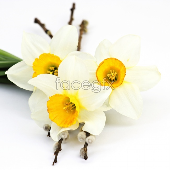 The beautiful white flower pictures