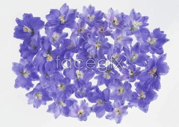 Thousand flower 34