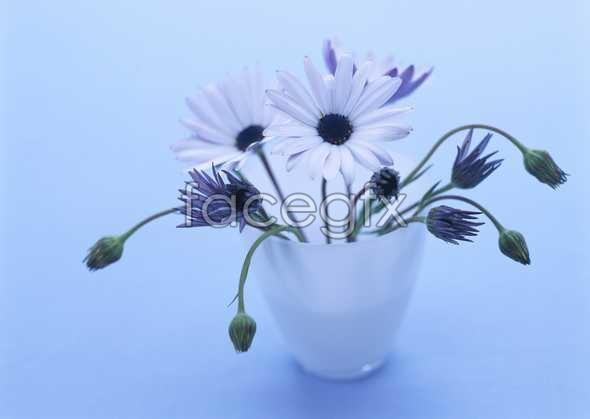 Daisy flower arrangements