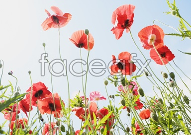 Flowers and pictures of 2,139