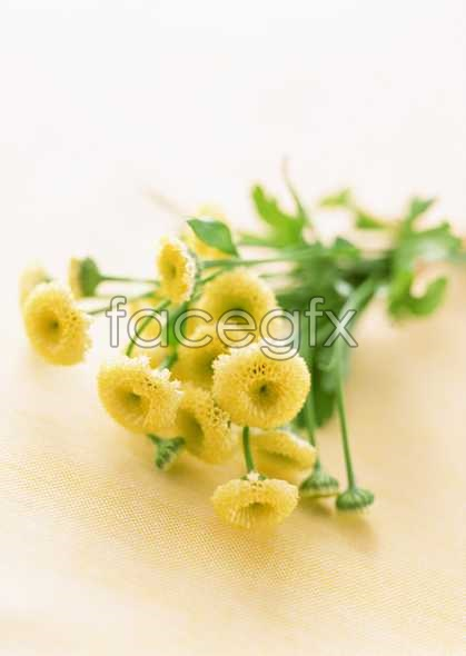 Flowers close-up 1735