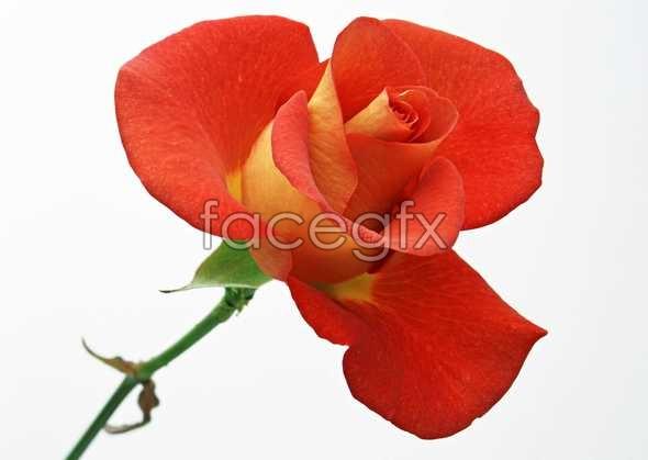 Flowers close-ups of 391