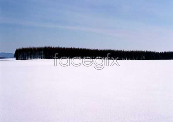 Ice 278