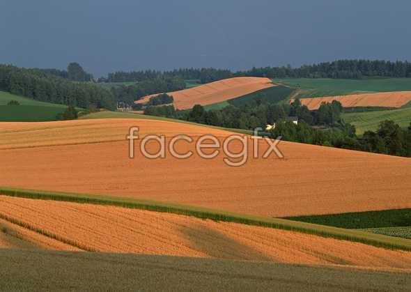 Idyllic country 88