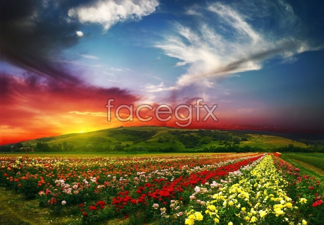 Romantic flowers HD pictures